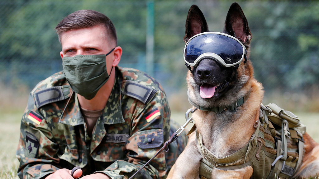 German study: Trained army dogs can detect COVID-19 - CGTN