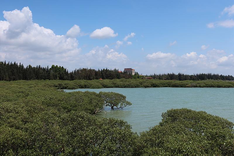 Bonzai mangroves