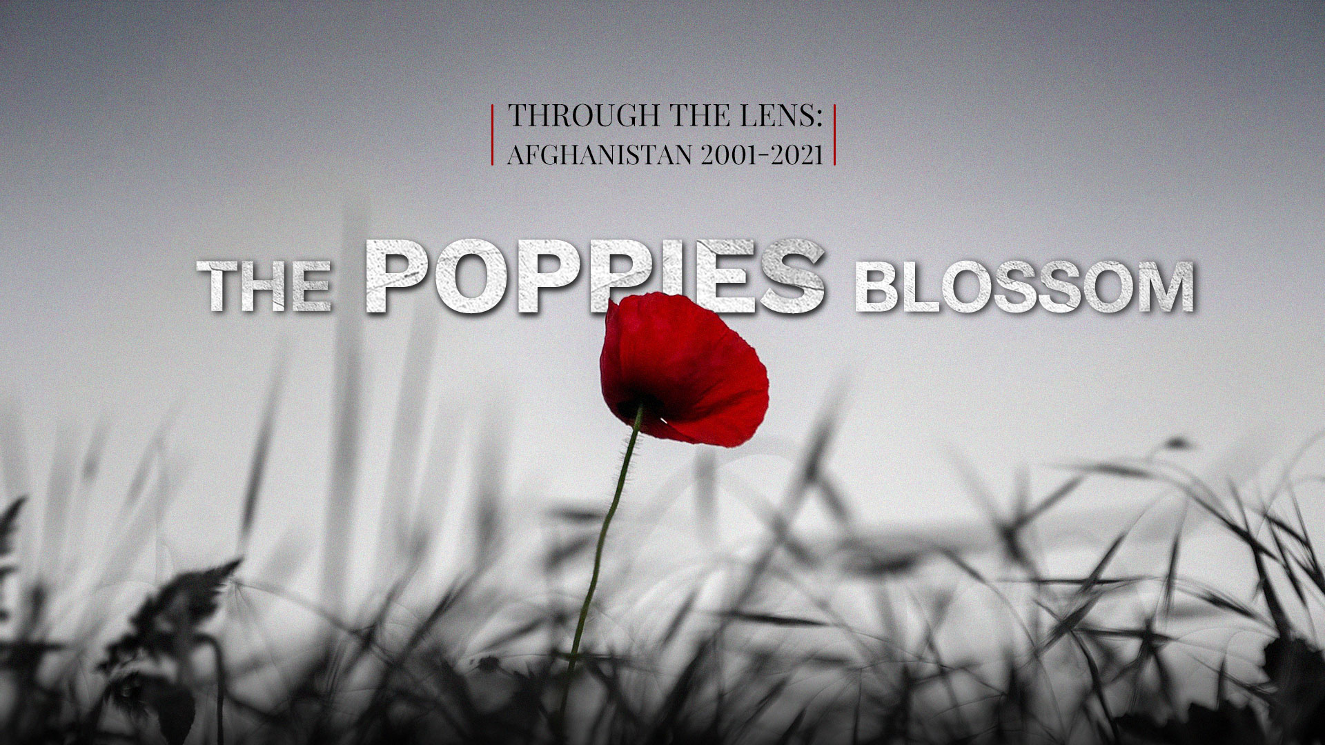 Afghanistan 2001-2021: The poppies blossom - CGTN