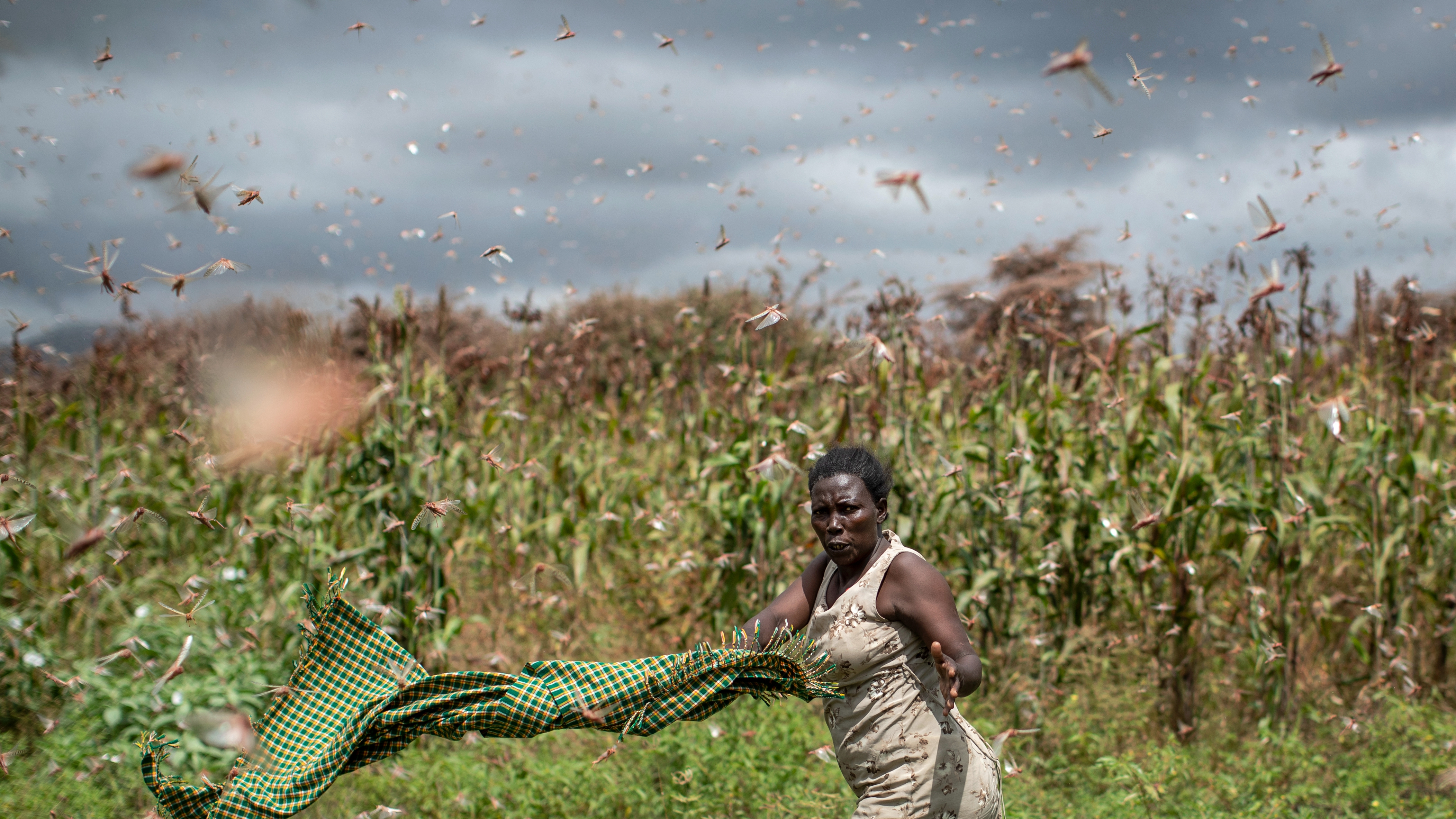 A system to monitor air pollution is helping track locust swarms ...
