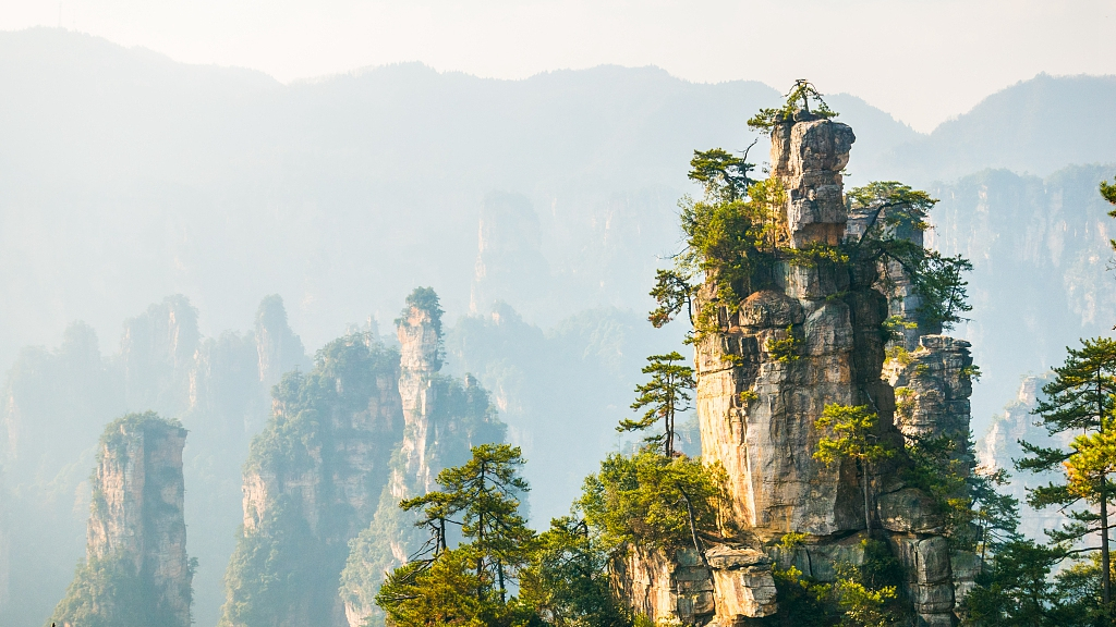 Over 900 million forest trips made in China in first half of