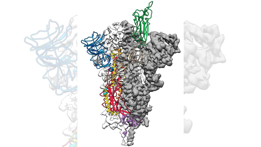 coronavirus inkubationszeit katze