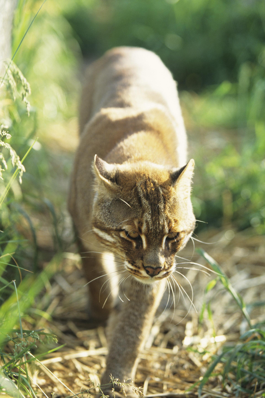 China Katze