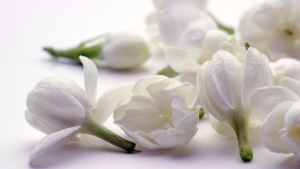 How Did The Jasmine Flower Become The Symbol Of Jiangsu Province Cgtn
