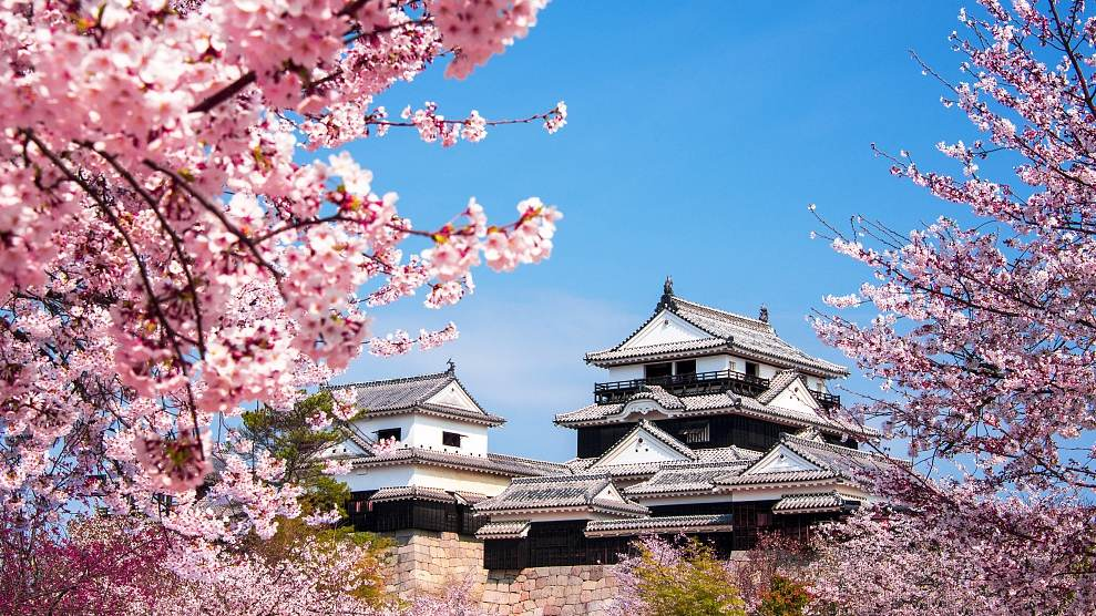 4f03430527a49 In the cherry blossom season in March and April, it is expected that a  record number of Chinese visitors will travel to Japan to view the flowers,  ...