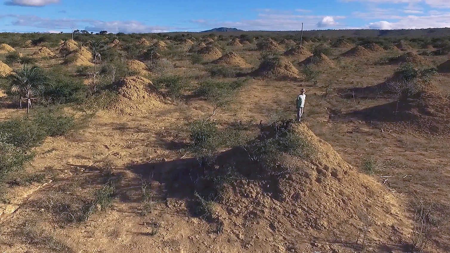Brazil S 4 000 Year Old Termite Mounds Can Be Seen From Space Cgtn