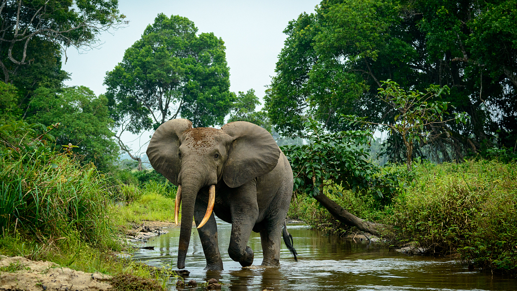 A Forest In Sumatra Disappears With Its Elephants