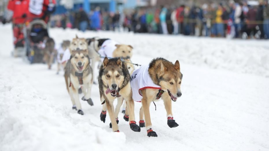 an overview of the idatarod dogsled race in alaska Home travel destinations alaska's iditarod dogsled race features man and animal against nature the iditarod trail has been named a national historic trail because of the race and the route of the race is alternated every other year.