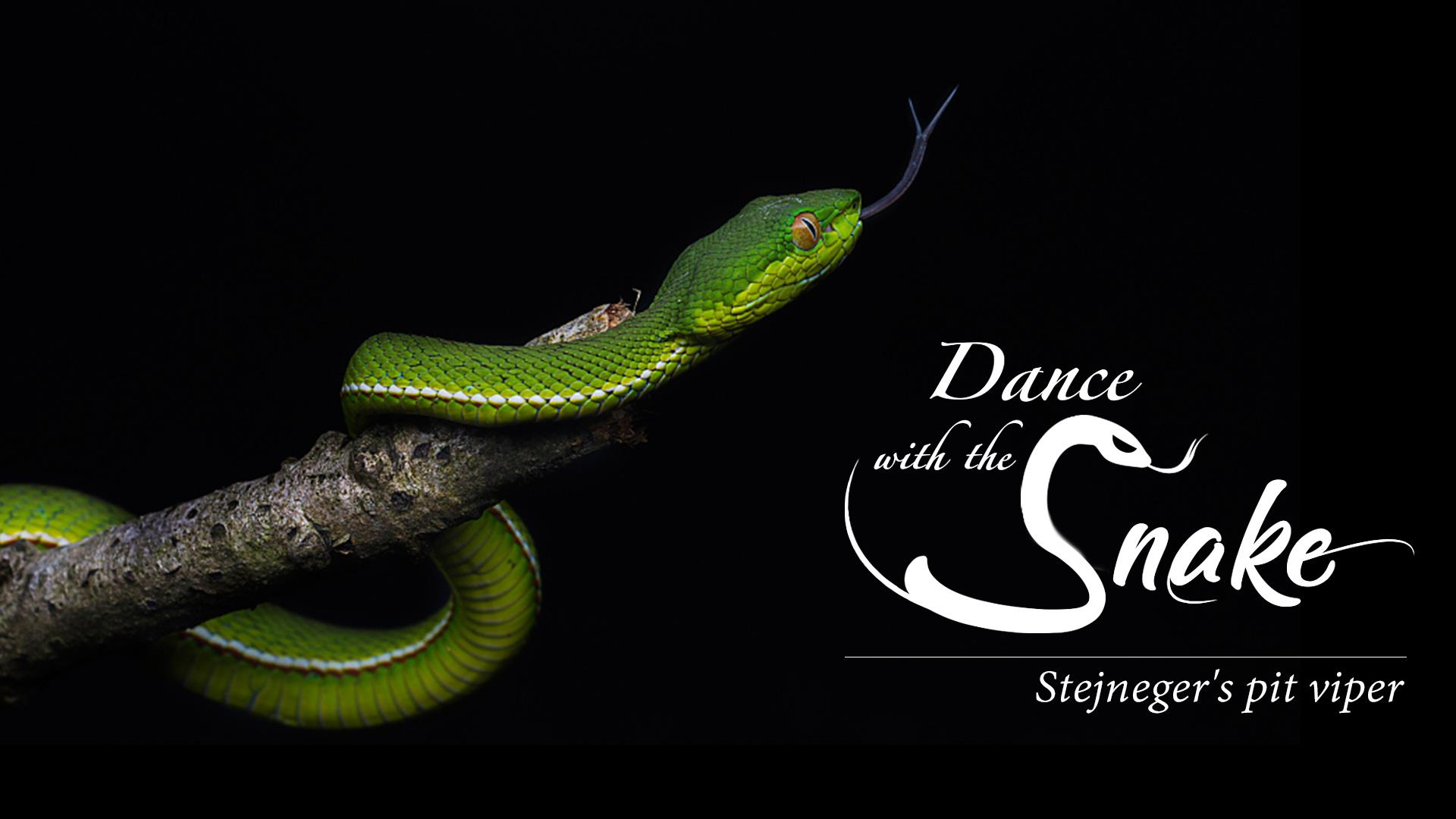 Dance With The Snake Not Fatal But Still Dangerous Cgtn