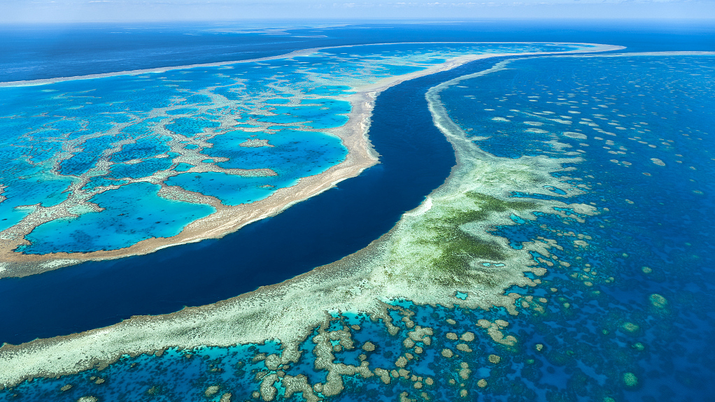 Great Barrier Reef suffers worst-ever coral bleaching: scientists - CGTN